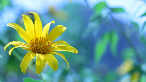 Flower In Nature stock footage