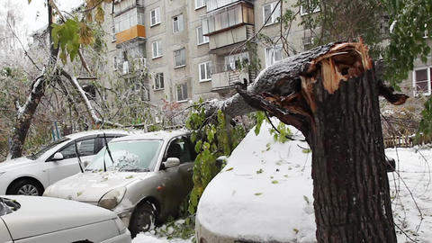 Large Tree Fell On A Car stock footage