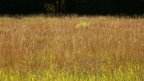 Autumn Grass 02 stock footage