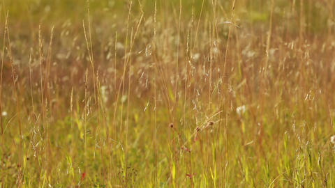 Autumn Grass 04 stock footage