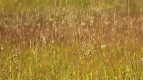 Autumn Grass 04 stock footage