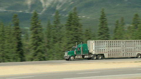 Livestock Transport Truck stock footage