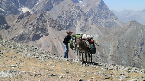 Drover strengthens the cargo on a donkey Footage
