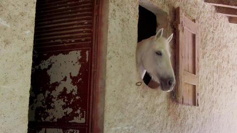 White Horse Head Footage