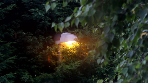 Mystic Lamppost Among The Trees stock footage