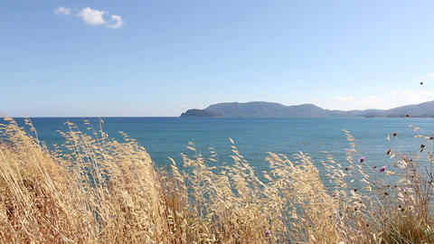 Hay Swaying At A Windy Shore In Greece stock footage