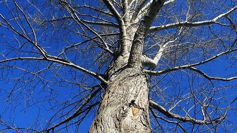 Old Tree stock footage