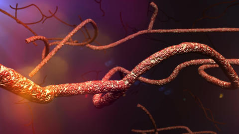 Microscopic Ebola Virus 3 D Animation 2 Footage