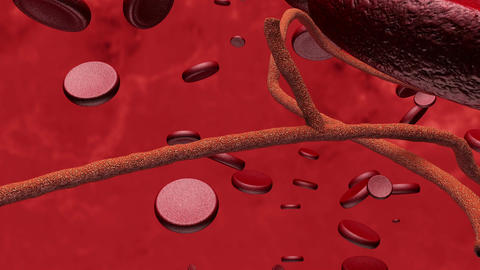 Microscopic Ebola Virus and Blood Cells 2 Animation