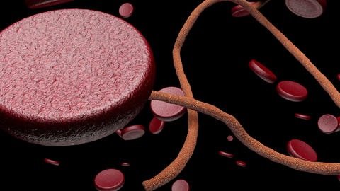 Microscopic Ebola Virus and Blood Cells 1 Animation