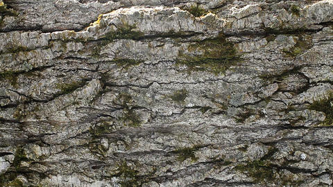 Old Tree stock footage