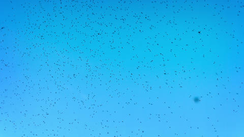 Mosquitoes in the sky Footage