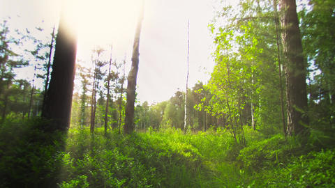 The view from the eye of the animal. hunting in th Footage