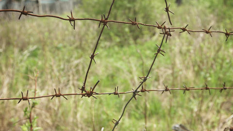 Barbed wire on a background of grass Footage