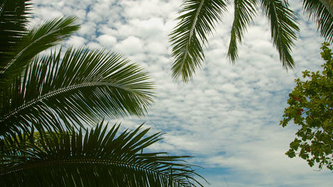 Leaves of palm trees against the sky. Exotic tropi Stock Video Footage