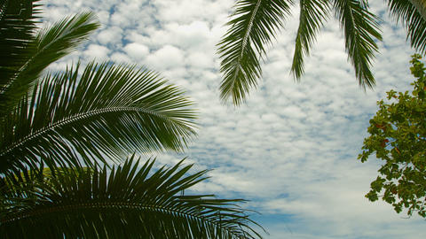 Leaves of palm trees against the sky. Exotic tropi Footage