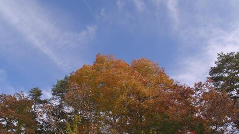 UHD RGB4:4:4 x264 紅葉 autumn Japan ライブ動画