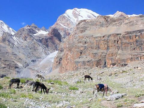 Donkeys grazing in the mountains. Pamir. Tajikista Footage