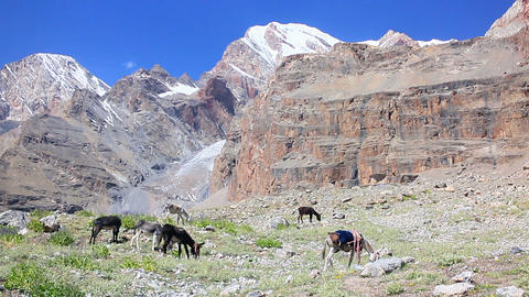 Donkeys grazing in the mountains. Pamir. Tajikista Footage