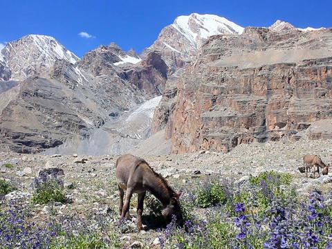 In the mountains, grazing donkeys. Pamir. Tajikist Footage