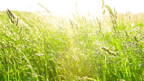 Grass With Sunset stock footage
