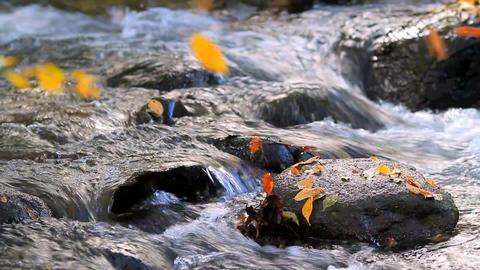 Autumn mountain river ライブ動画