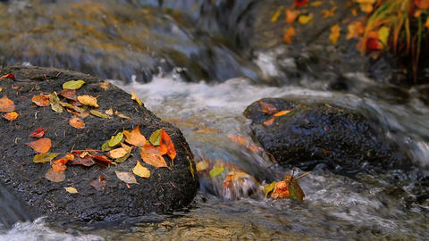 Autumn colorful leaves in the river Footage