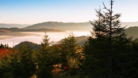 Mountains And Spruce And Fog. Time Lapse 4K stock footage