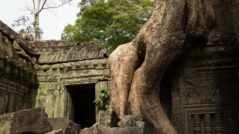 Tha-Prohm temple zoom-out timelapse Footage