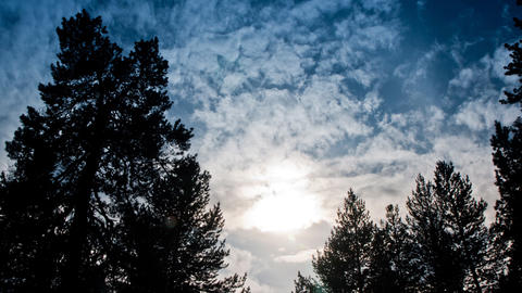 clouds and sun over the forest Stock Video Footage