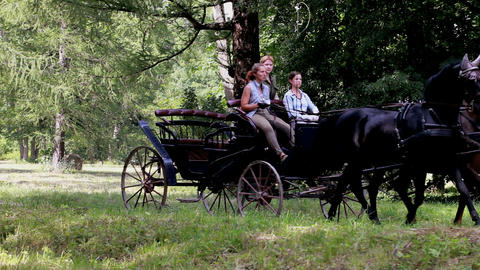 Coachman horse-drawn carriage Stock Video Footage