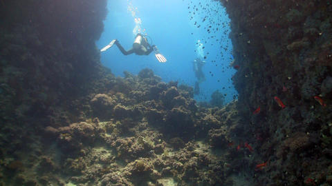 diver swims among coral reefs Footage