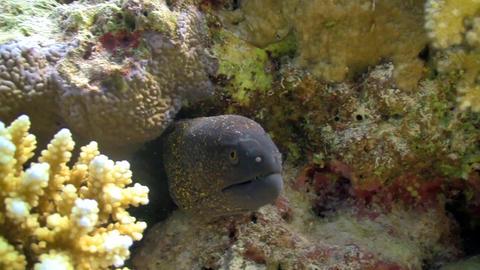 murena in coral reef Stock Video Footage