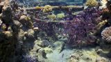 Shipwreck On The Seabed stock footage