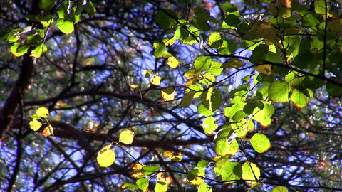 autumn leaves Stock Video Footage