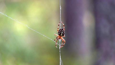 spider on web Footage