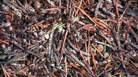 ants and anthill, close-up Stock Video Footage
