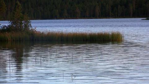 ripples on a lake, loop Footage