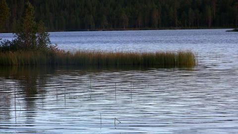 ripples on a lake, loop Stock Video Footage