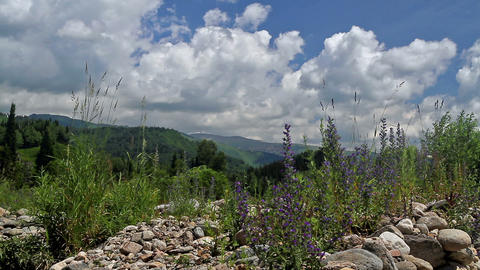 Altai foothills Stock Video Footage