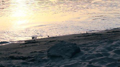 Woman feet running cross water Stock Video Footage