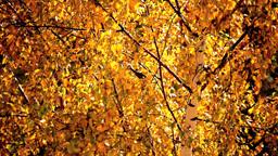 Autumn titmouse Stock Video Footage