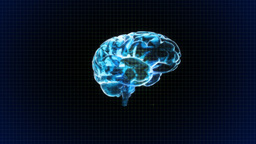 brain rotate with grid background Animation