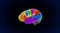 brain various section Animation