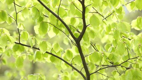 Shining Bright Green Footage