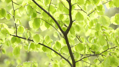 Shining Bright Green Stock Video Footage