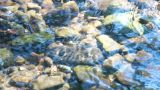 Brook Bed stock footage