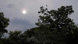 Lush Plants on Cloudy Day 02 Stock Video Footage