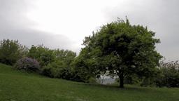 Mystic Scene 04 Footage