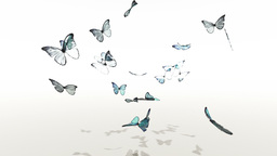 Butterfly Stock Video Footage